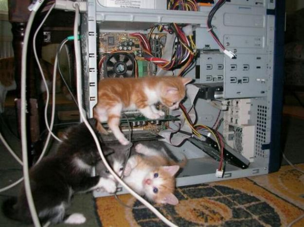 Les chats - nos petits compagnons - Page 5 X_11110