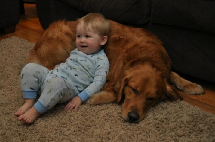 Chiens baby sitter - Page 5 X_11111