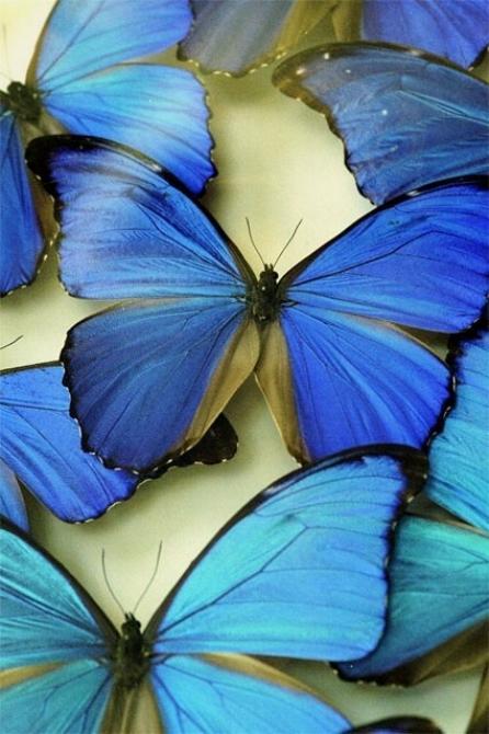 Merveilles de la nature - les papillons - X_1122