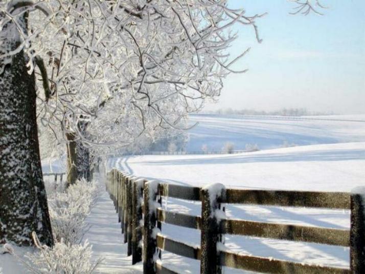 Beauté hivernale * X_1146