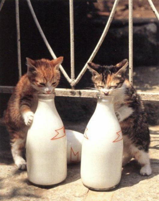 Les chats - nos petits compagnons - Page 6 X_11611