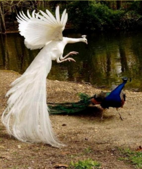 Les oiseaux du monde * X_1211