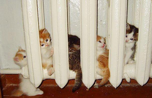 Les chats - nos petits compagnons - Page 6 X_12110