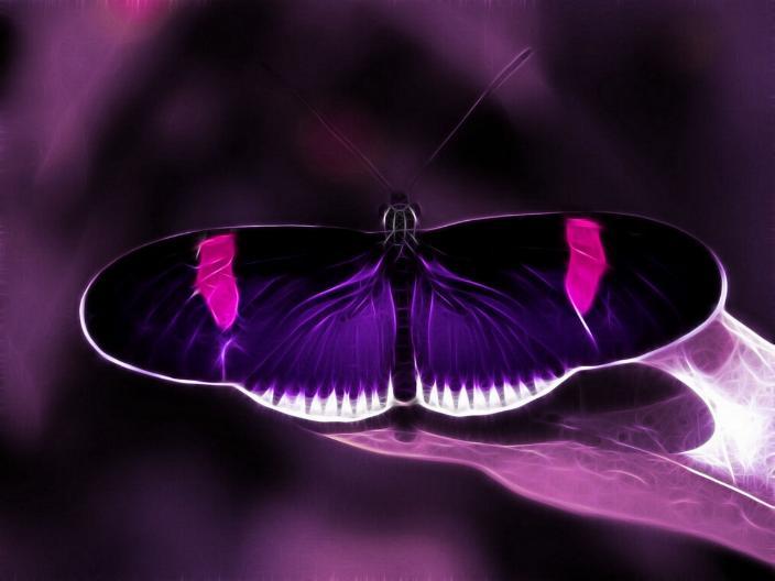 Merveilles de la nature - les papillons - X_1222