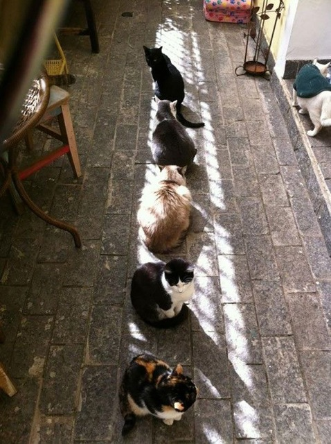 Les chats - nos petits compagnons - Page 6 X_12310