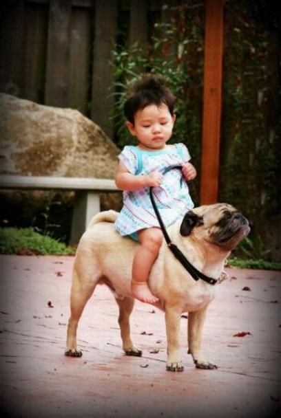 Chiens baby sitter - Page 6 X_12415