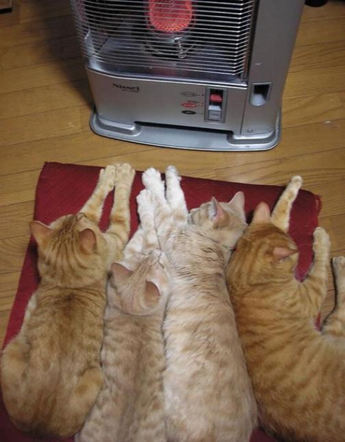 Les chats - nos petits compagnons - Page 6 X_12610