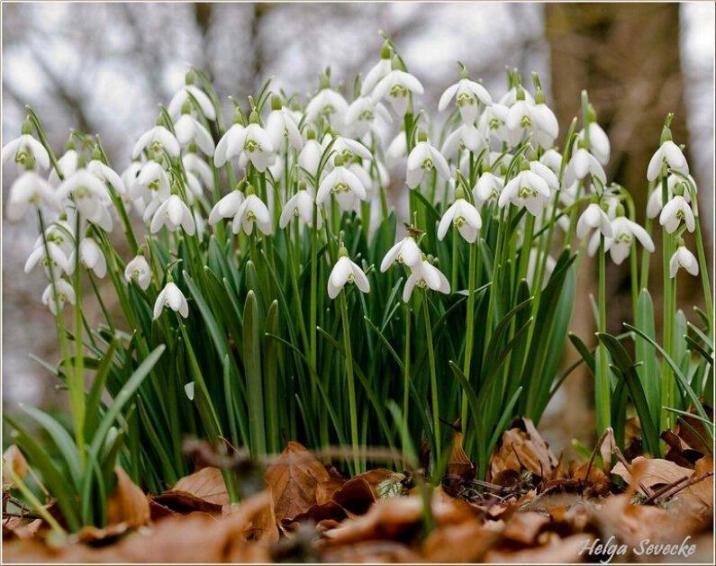 Bonjour printemps* X_1271