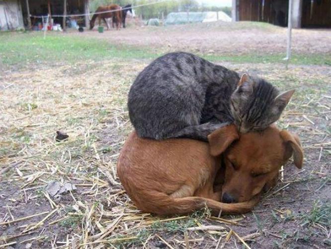 Les chats - nos petits compagnons - Page 6 X_12810