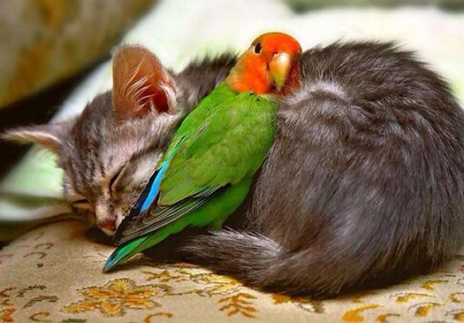 Les chats - nos petits compagnons - Page 5 X_12910