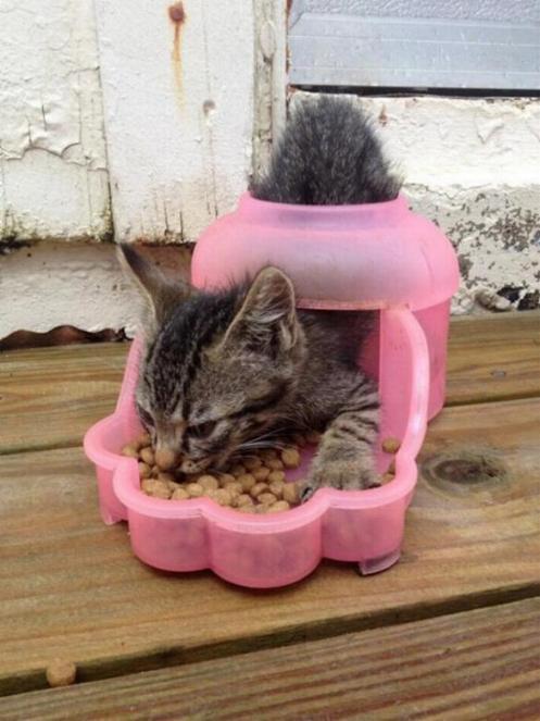 Les chats - nos petits compagnons - Page 6 X_13311