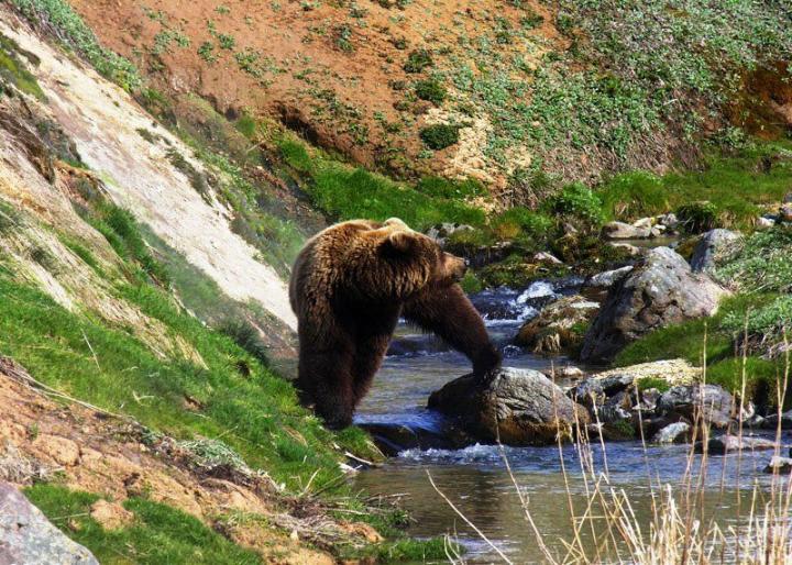 Kamchatka pays des ours et des volcans - X_1332