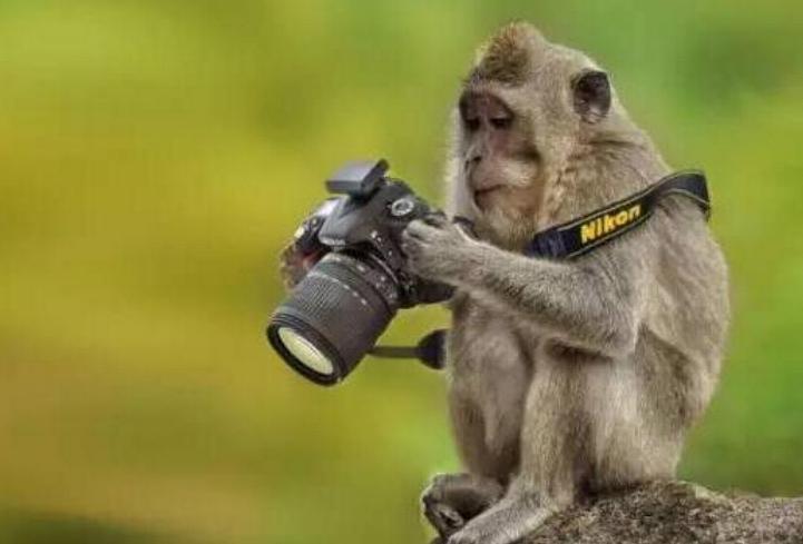 Bravo aux photographes * X_1351