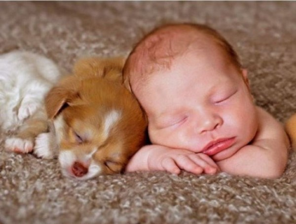 Chiens baby sitter - Page 6 X_13514
