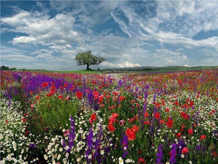 Bonjour printemps* X_1368