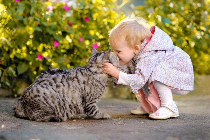 Les chats - nos petits compagnons - Page 7 X_13711