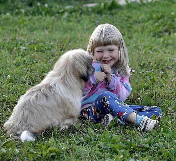 Chiens baby sitter - Page 6 X_13714