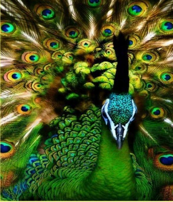 Les oiseaux du monde * X_1412