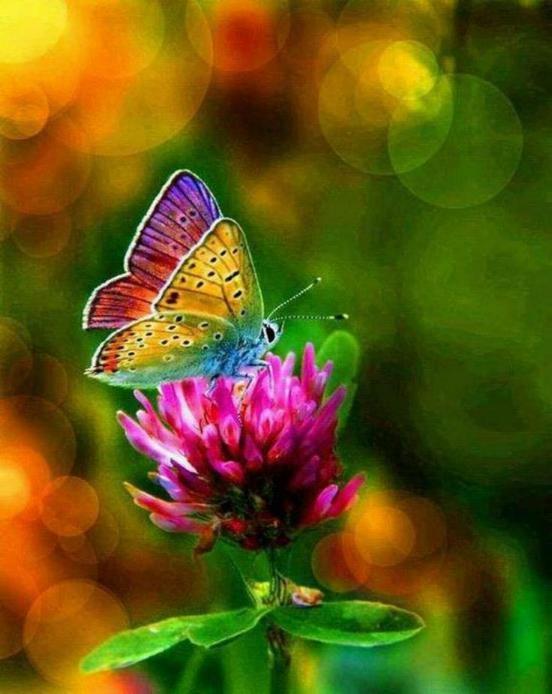 Merveilles de la nature - les papillons - X_1421