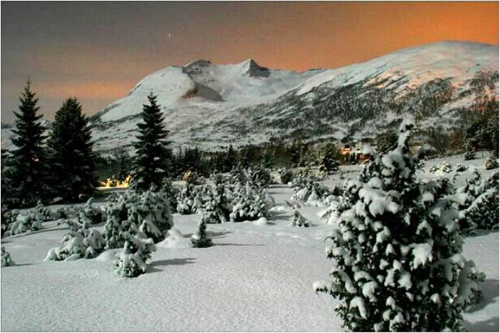 Beauté hivernale * X_1444