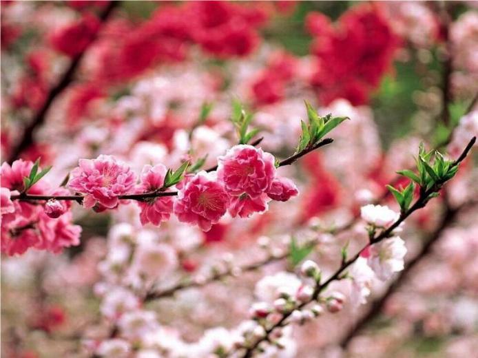 Bonjour printemps* X_1469