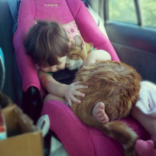 Les chats - nos petits compagnons - Page 7 X_14811