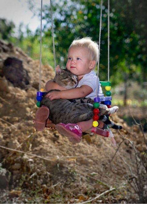 Les chats - nos petits compagnons - Page 7 X_14911