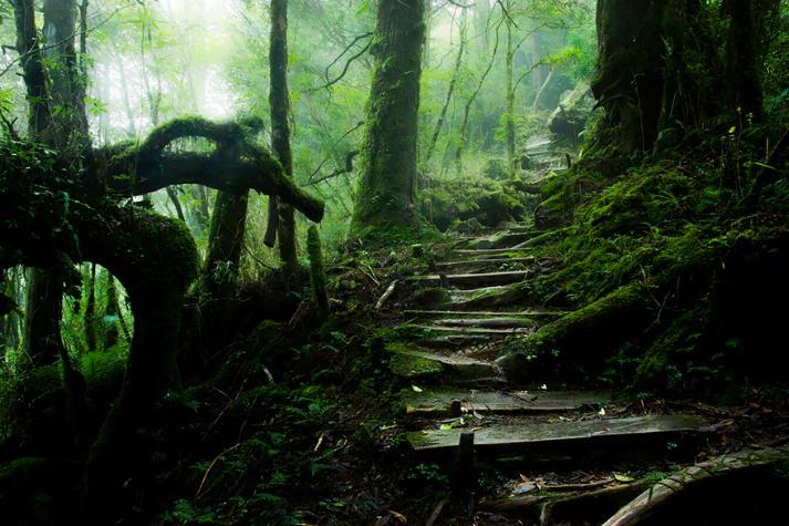 Des Chemins où la randonnée devient un rêve - X_14_t10