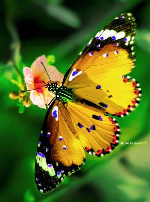 Merveilles de la nature - les papillons - X_1519