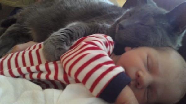 Les chats - nos petits compagnons - Page 7 X_15211