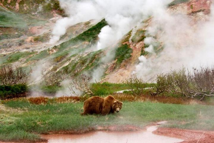 Kamchatka pays des ours et des volcans - X_1530