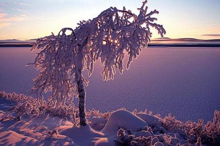 Beauté hivernale * X_1542