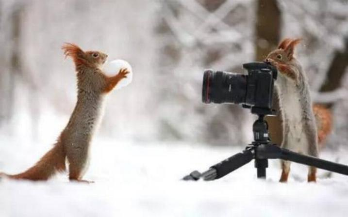 Bravo aux photographes * X_1548