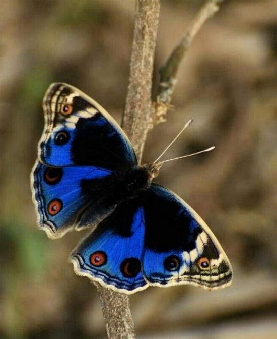 Merveilles de la nature - les papillons - X_1620