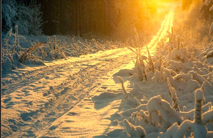 Beauté hivernale * X_1644