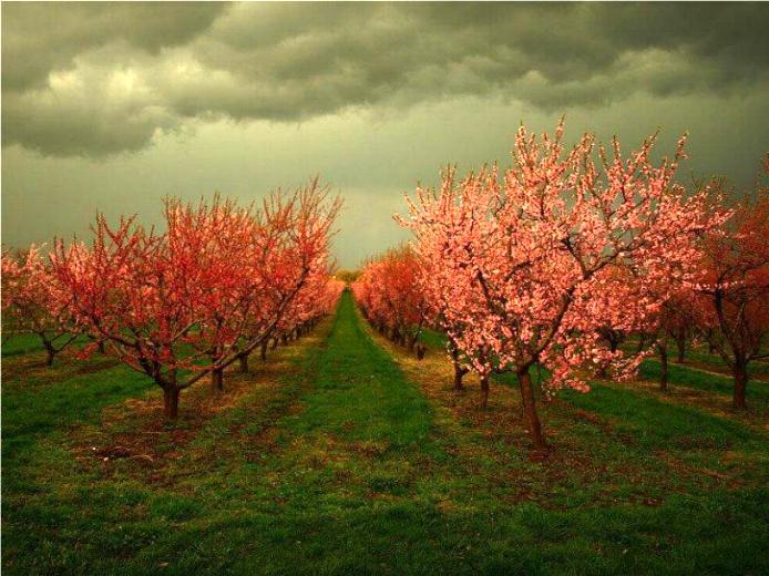 Bonjour printemps* X_1667