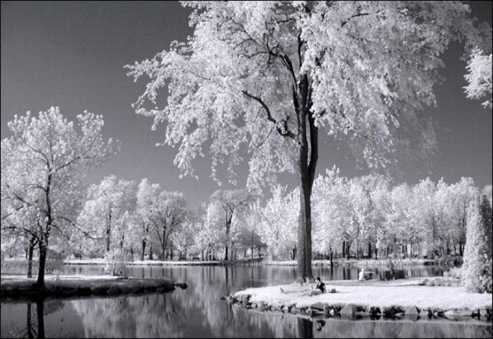 Beauté hivernale * X_1741