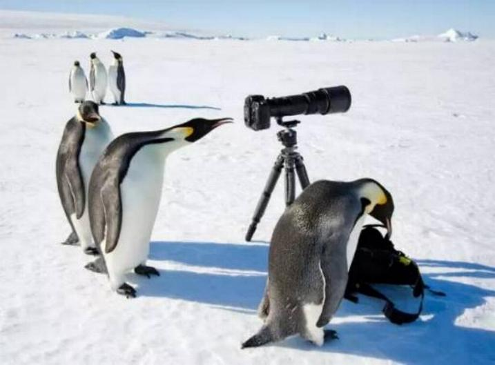 Bravo aux photographes * X_1746