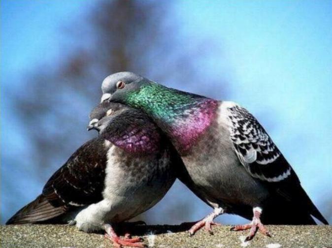 Les oiseaux du monde * X_1811
