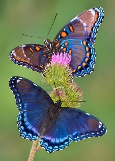 Merveilles de la nature - les papillons - X_1820