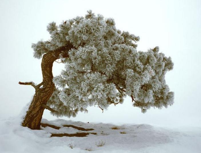 Beauté hivernale * X_1841