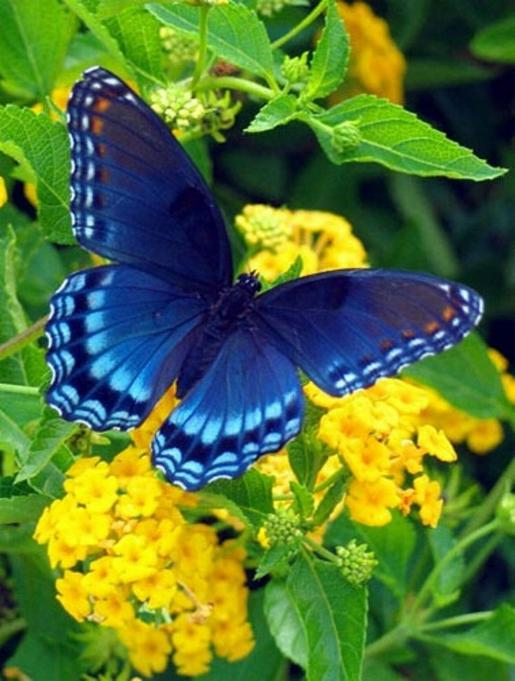 Merveilles de la nature - les papillons - X_1921