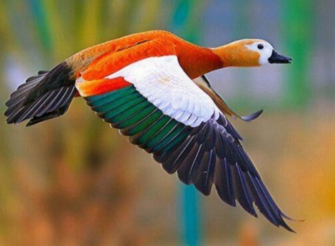 Les oiseaux du monde * X_2011