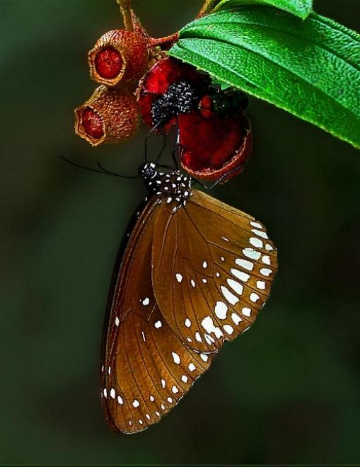Merveilles de la nature - les papillons - X_2019