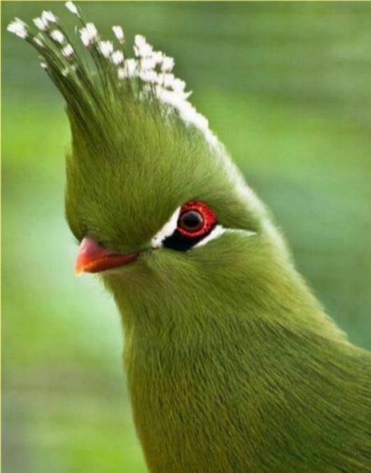 Les oiseaux du monde * X_2111