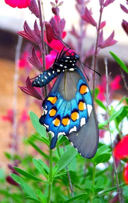 Merveilles de la nature - les papillons - X_2119