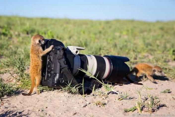Bravo aux photographes * X_2143
