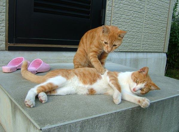 Les chats - nos petits compagnons - Page 11 X_22012