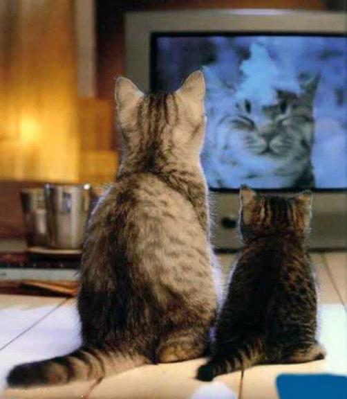 Les chats - nos petits compagnons - Page 11 X_22212