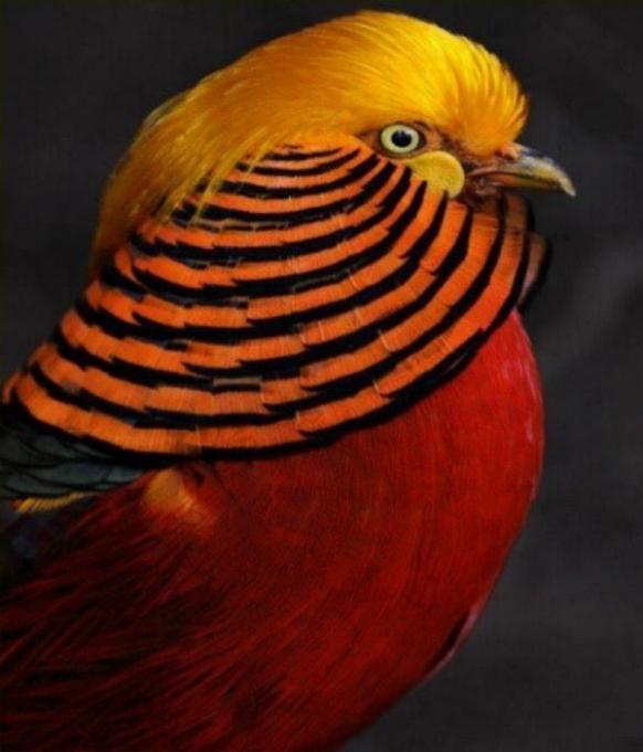 Les oiseaux du monde * X_2311